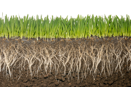 grassroots and soil